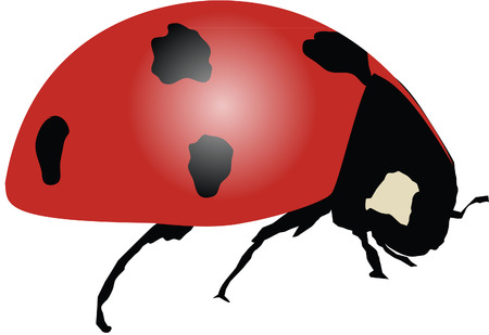 ladybird: ladybird lady bug Illustration