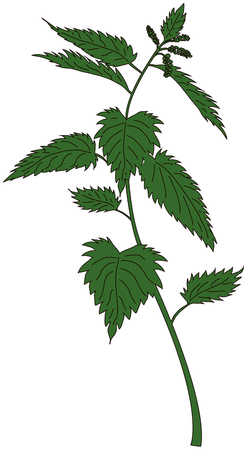 stock photograph: nettle