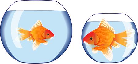 goldenfish: Goldfish bowl