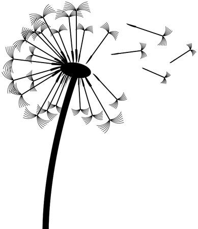 reloj de sol: Dandelion clock Vectores