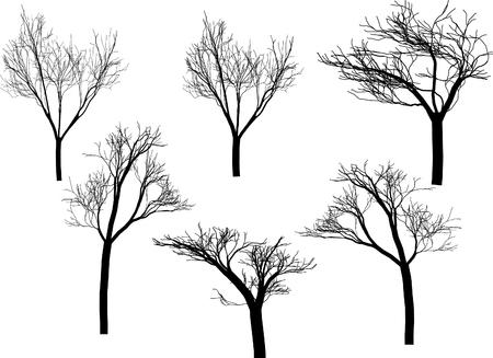 Silhouette trees Illustration