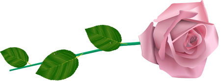 Rosa Dentellare