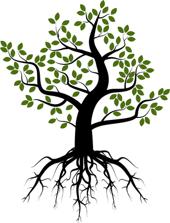 Tree with leaves and roots