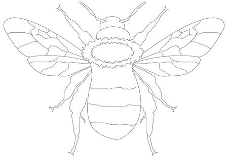 childrens coloring book bee Ilustração