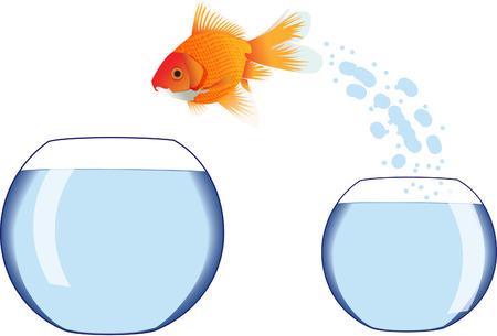 Gold fish jumping in bowl