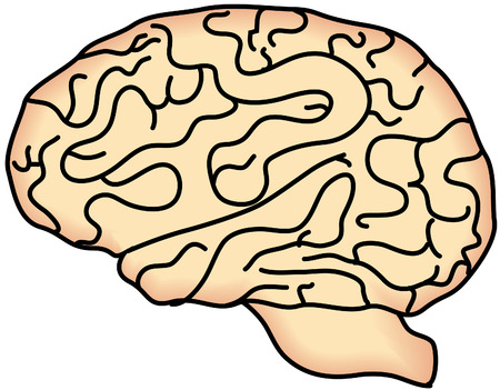 Brain cartoon vector