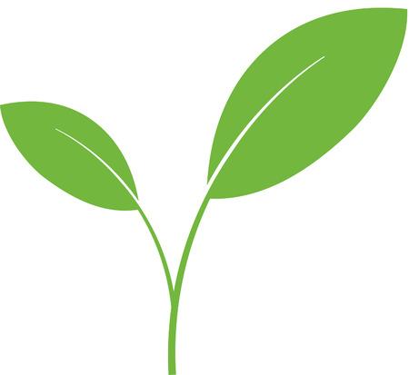 Plant green shoot