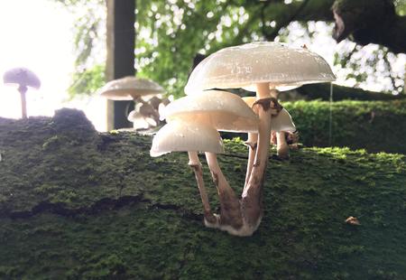 Fungus Close up
