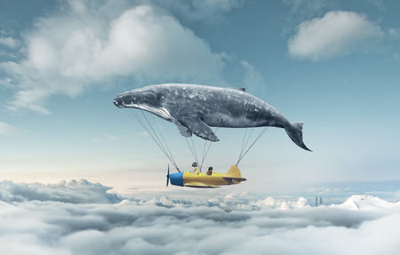 ballena: Llévame al sueño