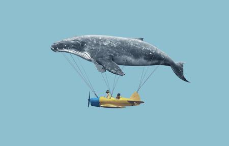 ballena: Ll�vame al sue�o