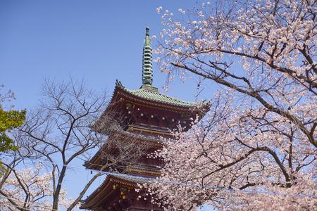 Cherry blossom Ueno Park, Tokyo