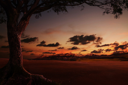 photo manipulation: Sunset landscape and with silhouettes of tree,photo manipulation.