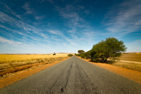 ble: Straight road goes to horizon on background of ble sky and Golden wheat field.