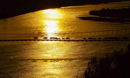 The cattle cross the drawbridge, golden hour scene ,scenery in Xinjiang , China . Stock Photo