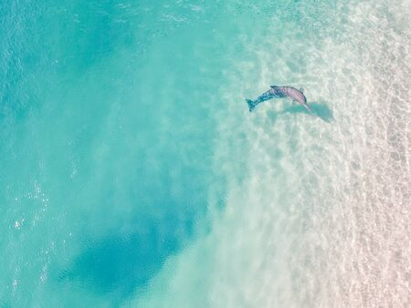 A dolphin takes a break from hunting fish to investigate the curious people on shore. Taken by drone in Queensland Australia.