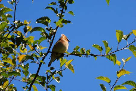 Beautiful bird on a beautiful day Stock fotó
