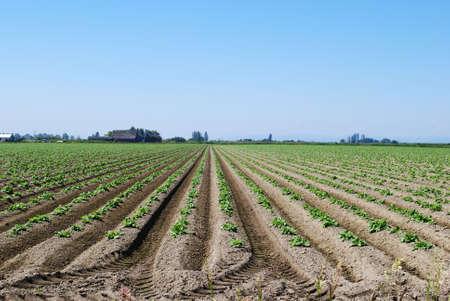 Great View of Farmland