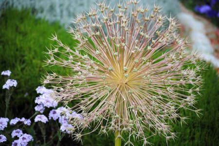 shaped: pin shaped flower