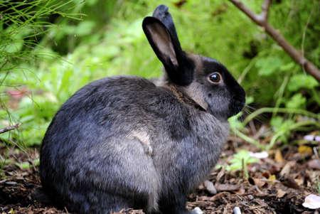 Wild rabbit in the grass photo
