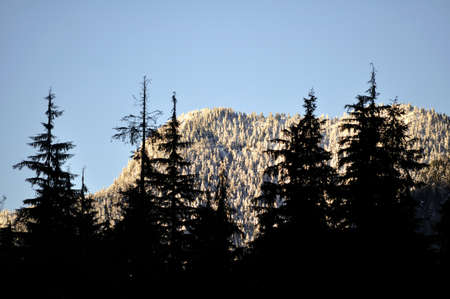 behind: snow-capped mountains behind trees