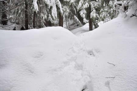 heavy snow buries trail