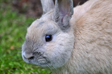 closeup of rabbit photo