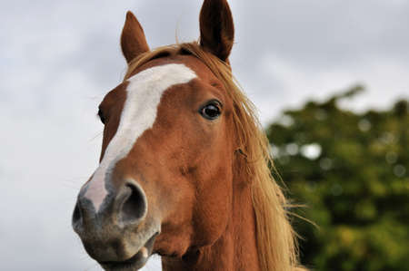 high-spirited horse