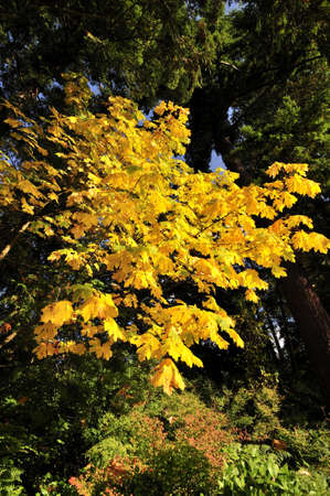 yellow foliage in the park photo
