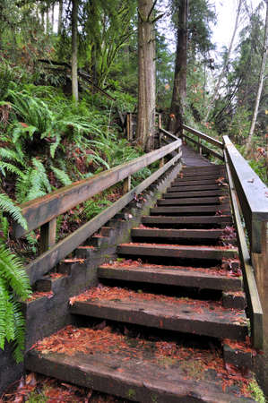 wooden stairs going up to the hill Stock Photo - 11676253
