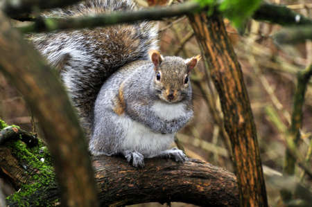 squirrel in the tree with branches forming a frame Stock Photo - 12115265