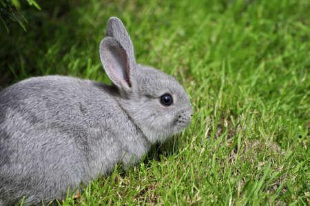 Wild rabbit in the park photo