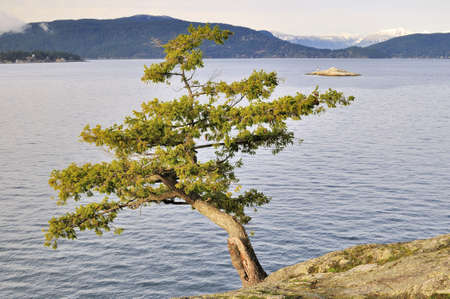 edge: tree growing on a cliff edge Stock Photo