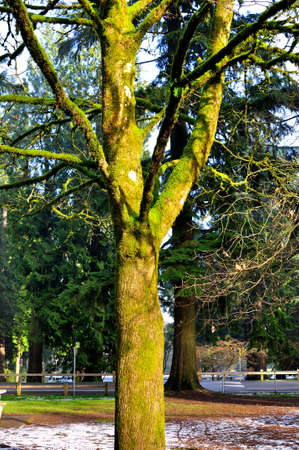 leafless tree with moss on branches and trunks