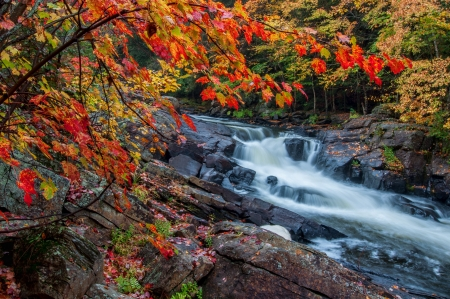 The red maples leaves frame this beautiful waterfall in Algonquin park at the peak of the fall colors  版權商用圖片