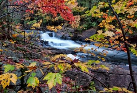 多くの異なった色のカラフルな紅葉に囲まれて川