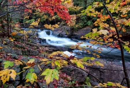 River framed by colorful autumn leaves of many different colors  Stock Photo