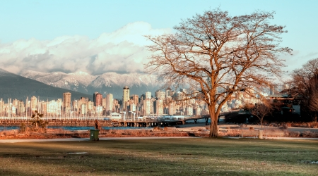 Bare tree with no leaves and Vancouver city skyline at sunset Standard-Bild