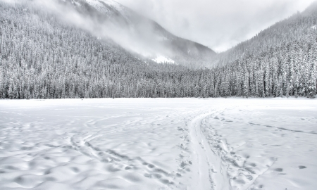 ski track: Frozen lake with a sled train in the mountain with trees covered in snow