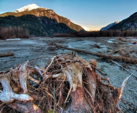 Riverside tree stump as sunrise lights mountains