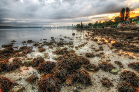 Vancouver shoreline during sunrise at low tide Stock Photo