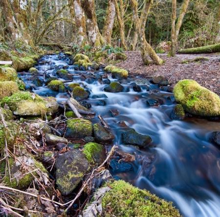 Vloeiende kreek met bemoste rotsen in een bos in de buurt Squamish, BC, Canada Stockfoto