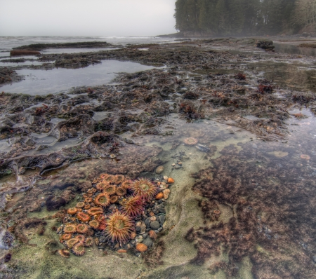 Tidal pool filled with living botanical life and anemones photo