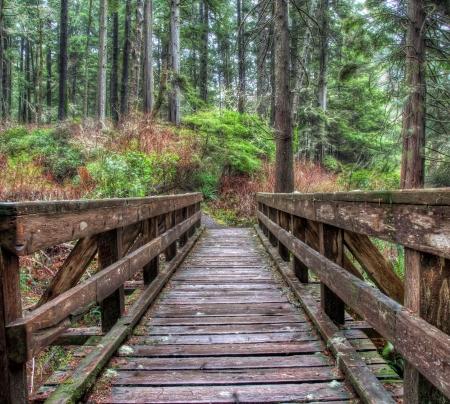 juan: Along forest trail is a wooden foot bridge