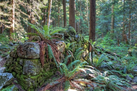 british columbia: Remains of old wall overgrown with ferns in forest