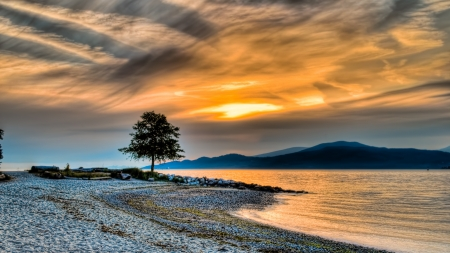 british columbia: Sunset along coast with lone tree and mountains