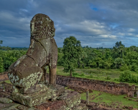 siem reap: Jungle with stone lion at Angkor Wat