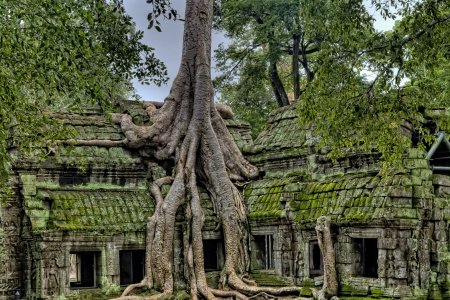 Angkor Wat Temple With Tree Growing Out of It