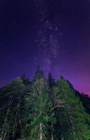 Milky Way in purple sky with lit green trees  Stock Photo