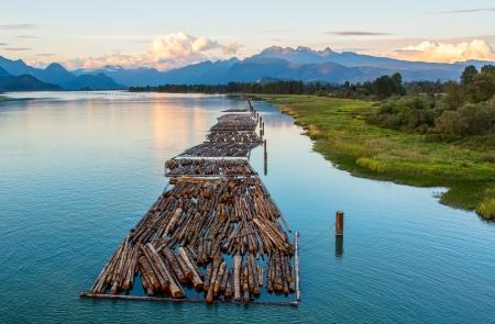 Verre bergen met logs op de rivier Stockfoto