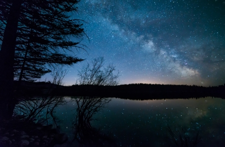 night landscape: Milky way with trees